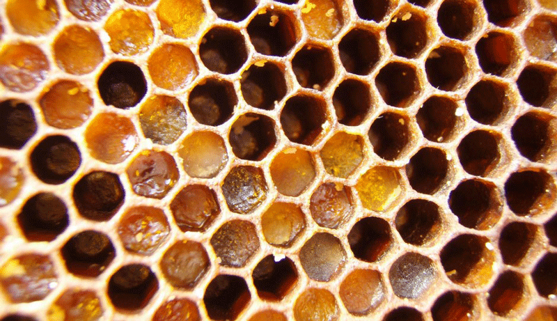 Searching For Pollen In Honey | Bee Culture