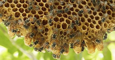 CATCH THE BUZZ – Researchers examine how supporting pollinators helps agriculture