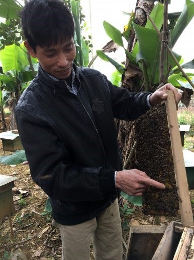 CATCH THE BUZZ – Vietnam's beekeepers fight climate change to keep their hives alive.