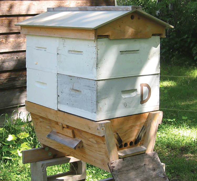 Experiences With a Top Bar Hive | Bee Culture