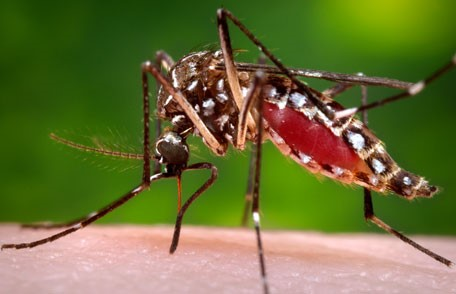 CATCH THE BUZZ – Scientists kill malaria-carrying mosquitoes with genetically engineered fungi that's safe for bees!