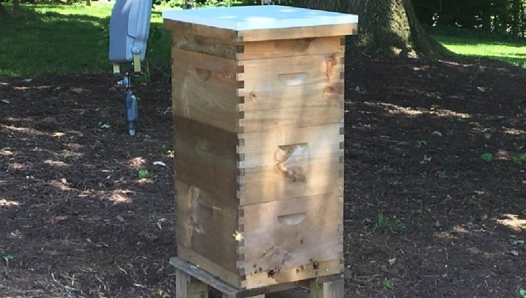 CATCH THE BUZZ – Beehive 2: Beehive installed at vice president's house, joining White House