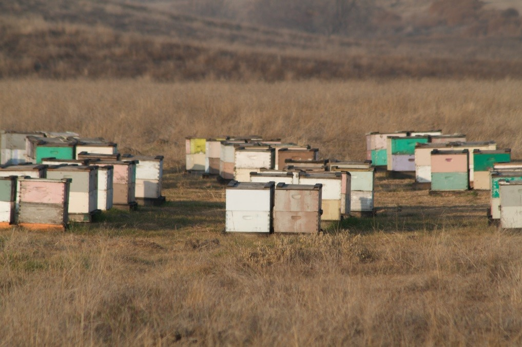 CATCH THE BUZZ – The Los Angeles Times reports Pavel Tveretinov, a 51-year-old beekeeper from Sacramento, CA, was arrested on suspicion of possessing nearly $1 million worth of stolen hives.