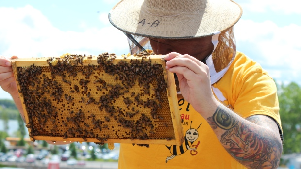 CATCH THE BUZZ – 'Amazing Change' For Montreal Homeless Men Taking Part In Urban Beekeeping Program. Accueil Bonneau Program Yields Positive Results For Participants Building Job Skills, Confidence