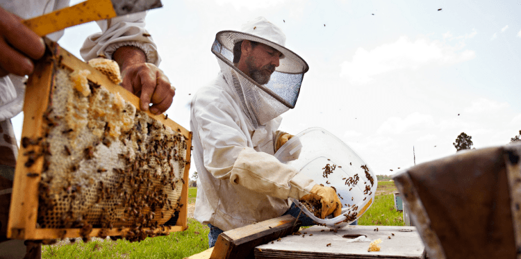 CATCH THE BUZZ – Considering That The History Of Agriculture Is Thousands Of Years Old, Commercial Beekeeping And Its Importance To Agriculture Is A Relatively New Development.
