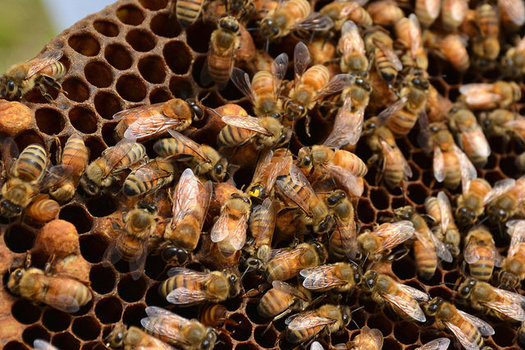 CATCH THE BUZZ – Project in ND Helping Beekeepers Deal with Bee Stressors