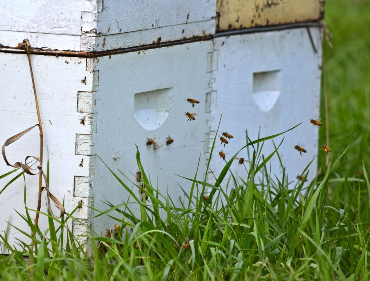 CATCH THE BUZZ – This Program Offers An Opportunity For A Beekeeper And A Farmer Or Rancher To Open Up A Dialogue About Sustainability And Stewardship In The Agriculture Community.