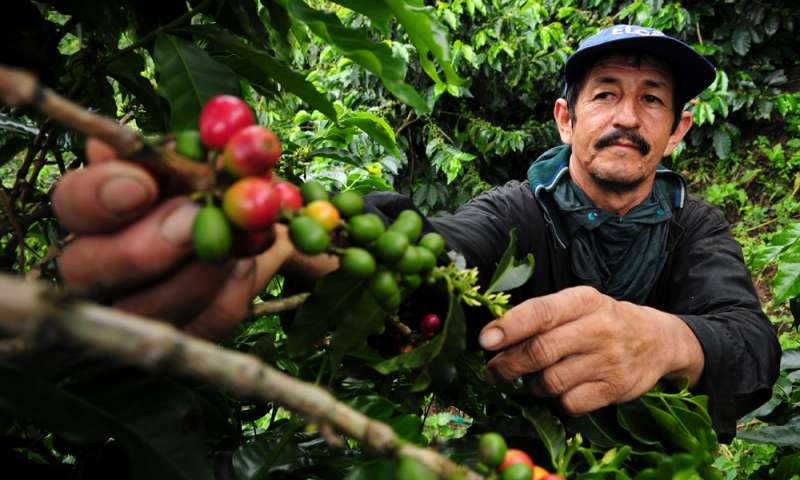 CATCH THE BUZZ – Climate Change A Buzzkill For Coffee Lovers.