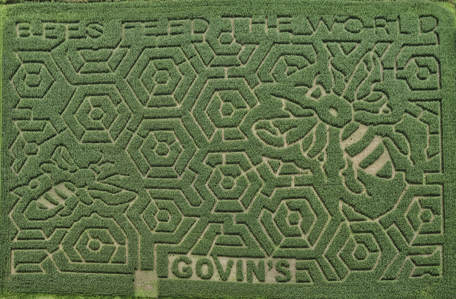 CATCH THE BUZZ -Fantastic Corn Maze Gives Bees A Cool Look