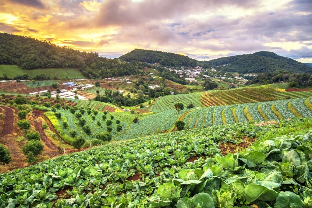 CATCH THE BUZZ – Sustainable Agriculture is the Best Way to Feed the World, New Research Confirms