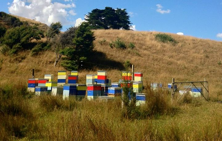 CATCH THE BUZZ – Police Have Arrested A Beekeeper In Relation To The Theft Of Nearly $200,000 Worth Of Beehives In The Bay Of Plenty.