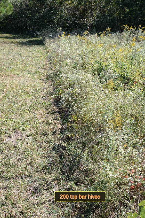 Figure 1 Death On The Left Meets Life On The Right. On The Left, Excessive  Mowing Has Destroyed The Wildflower Diversity, Leaving A Green Desert Of  Grass.
