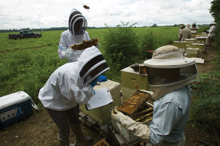 Oxalic  A Better Way? | Bee Culture
