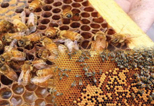 CATCH THE BUZZ – China Collects Honey From Over 10 Million Bee Boxes While India Has Only 1.2 Million Bee Boxes But Is Aiming For 10 Million.