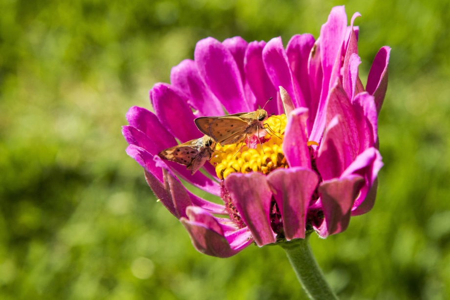 CATCH THE BUZZ – Pollinators Face Challenges From Environmental Contaminants, Disease And Parasites And Significant Loss Of Habitat.