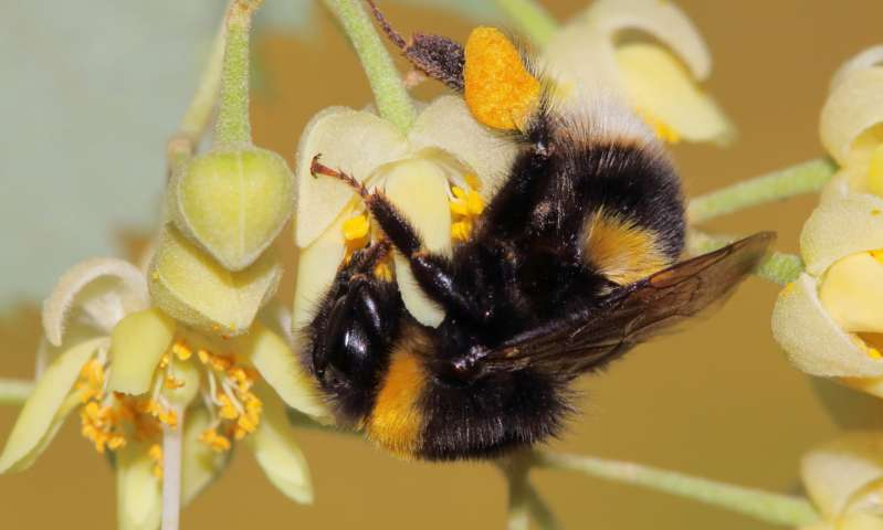 CATCH THE BUZZ – Do Lime Trees Kill Bees? The Earliest Proposed Explanations Pointed The Finger Of Blame At Nectar Toxins