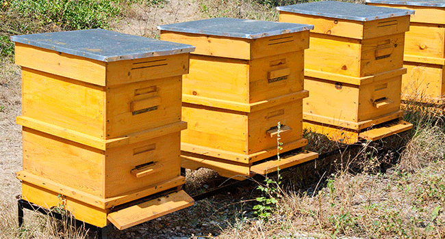 the evolution of beehive covers bee culture