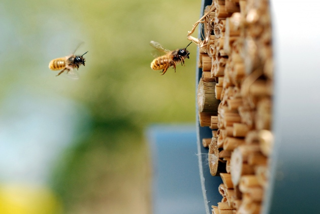 CATCH THE BUZZ – As Regulators Consider A Ban On Neonicotinoids, Debate Rages Over The Harm They Cause To Bees.