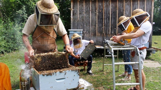 CATCH THE BUZZ -Honey Production Down As Rain Dampens Beehive Libido. Warm Fall Weather Helps Save Season.