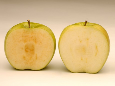 CATCH THE BUZZ – Arctic Apples Now Available In US Stores
