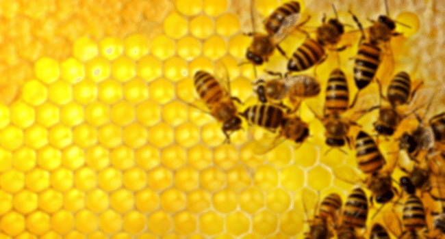 BEEYARD THOUGHTS – OBSERVATIONS AND UPDATES | Bee Culture