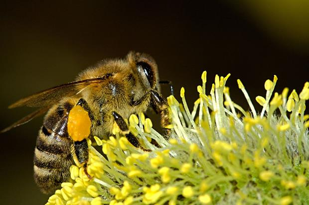 CATCH THE BUZZ – Neonicotinoids Vote Nears As Lobbying Steps Up In The EU. Total Ban May Be In The Works.