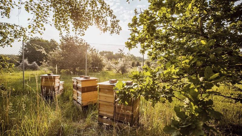 CATCH THE BUZZ – Porsche Is Actually Harvesting The Honey From Colonies Around Its Production Facility In Leipzig, Germany.