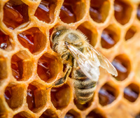 CATCH THE BUZZ – Risk Assessment On The Potential Risks To Bees From Neonicotinoid Pesticides.