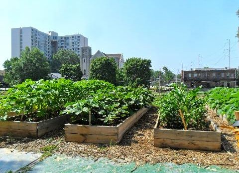 CATCH THE BUZZ – Urban Agriculture Worth $33 Billion Worldwide, And Could Be A Lot More.