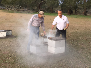 CATCH THE BUZZ – Florida Beekeepers: 'Fewer Bees Could Spell Higher Prices for Food'