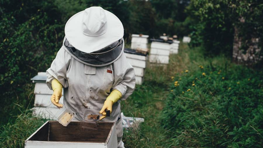 CATCH THE BUZZ – Too Many Bees, No Matter Where, Can Be A Bad Thing for Bees, Beekeepers and Anybody in the Fecal Flight Path.