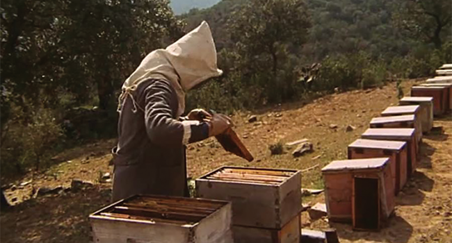 The Spirit Of The Beehive Bee Culture