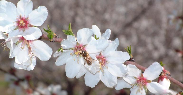 CATCH THE BUZZ – Cautious Optimism for Sufficient Bee Colonies for Almond Pollination.