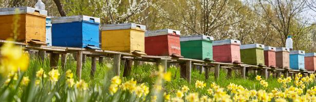 CATCH THE BUZZ – Neonicotinoids: Risks to Bees Confirmed.