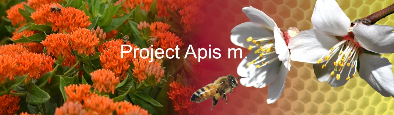 CATCH THE BUZZ – Read the March issue of Project Apis m Newsletter, and meet Tammy Horn Potter.