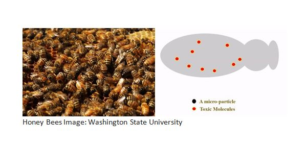 CATCH THE BUZZ – Scientists Create Microparticles That Could Help Save Honey Bees.