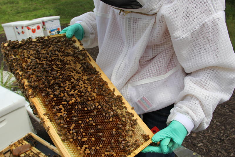 CATCH THE BUZZ – Monsanto and St. Louis Biotech Startup Develop Tool to Protect Bees and Fight Pests.