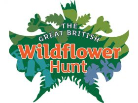 CATCH THE BUZZ – The Great British Wildflower Hunt – To Pick, or Not To Pick. That is the Question.