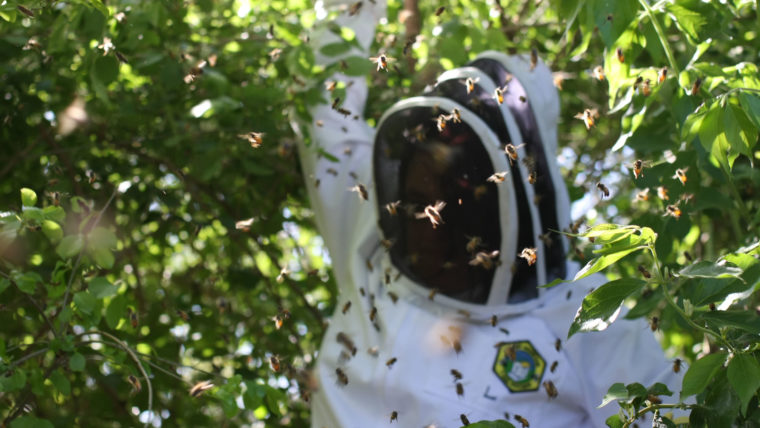 CATCH THE BUZZ – Bees! They May Be Your New Neighbors, But Don't Panic.