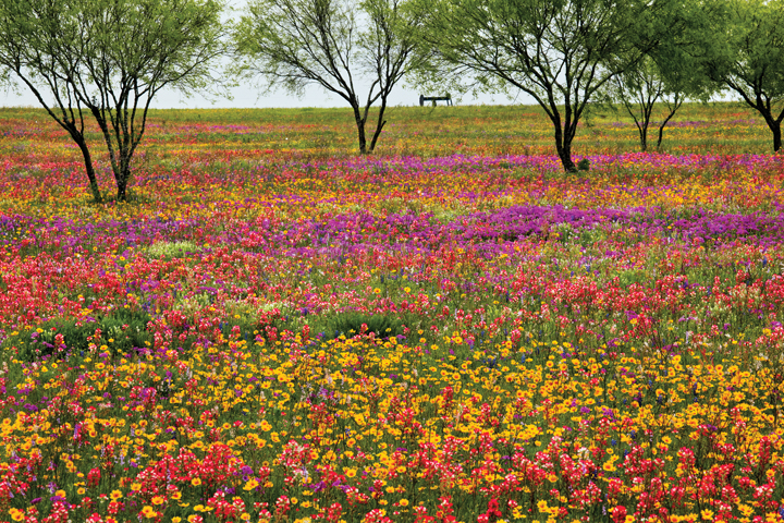CATCH THE BUZZ – The Texas A&M University Natural Resources Institute (NRI) is Promoting Statewide Land Stewardship Relating To Pollinators.