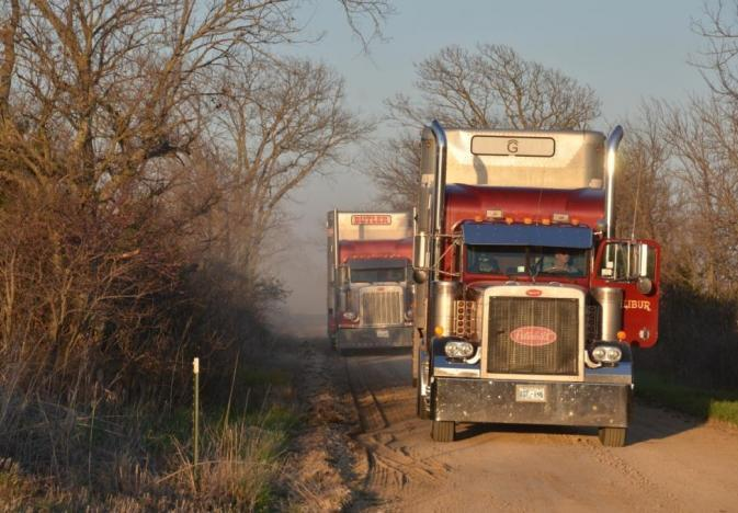 CATCH THE BUZZ – ELD, Hours of Service Fixes for Livestock Haulers, Including Honey Bees, Proposed by Senators.
