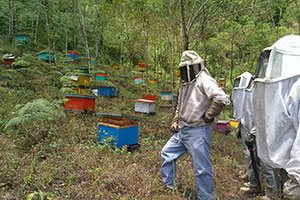 CATCH THE BUZZ – New Research Shows Impact of Bees on Coffee Productivity.