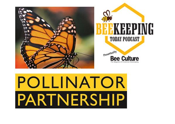 CATCH THE BUZZ – Bee Culture's First Podcast