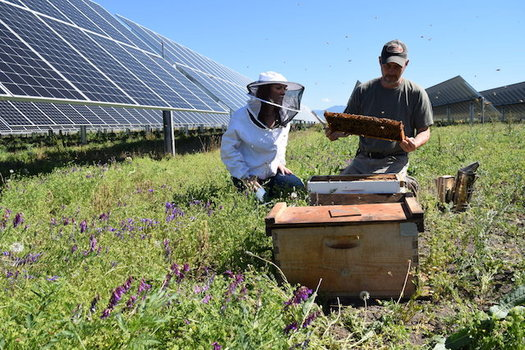 CATCH THE BUZZ – Nation's Largest Solar Bee Farm in Oregon. Creating Buzz