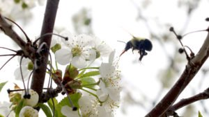 CATCH THE BUZZ – There's A Lot More Bad to Fungicide Exposure to Honey Bees Than You Thought. A Lot.