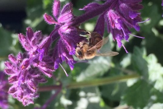 CATCH THE BUZZ – Pesticides Used in Crop Protection Have a Significant Negative Impact on the Learning and Memory Abilities of Bees.