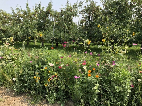 CATCH THE BUZZ – Washington Fruit Grower-Shipper Participates in National Pollinator Conservation Initiative.