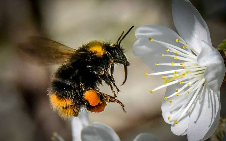 CATCH THE BUZZ – Sulfoximine-Based Insecticides May Harm Bees as Much as Those They are to Replace.