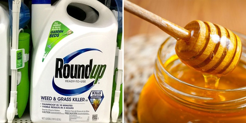 CATCH THE BUZZ – FDA Finds Glyphosate in Honey. What Now?