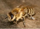 CATCH THE BUZZ – BEEsharing – An Online Network That Combines Beekeeping and Agriculture. A Digital Pollination Broker